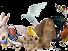 Kleintierzüchterverein.png